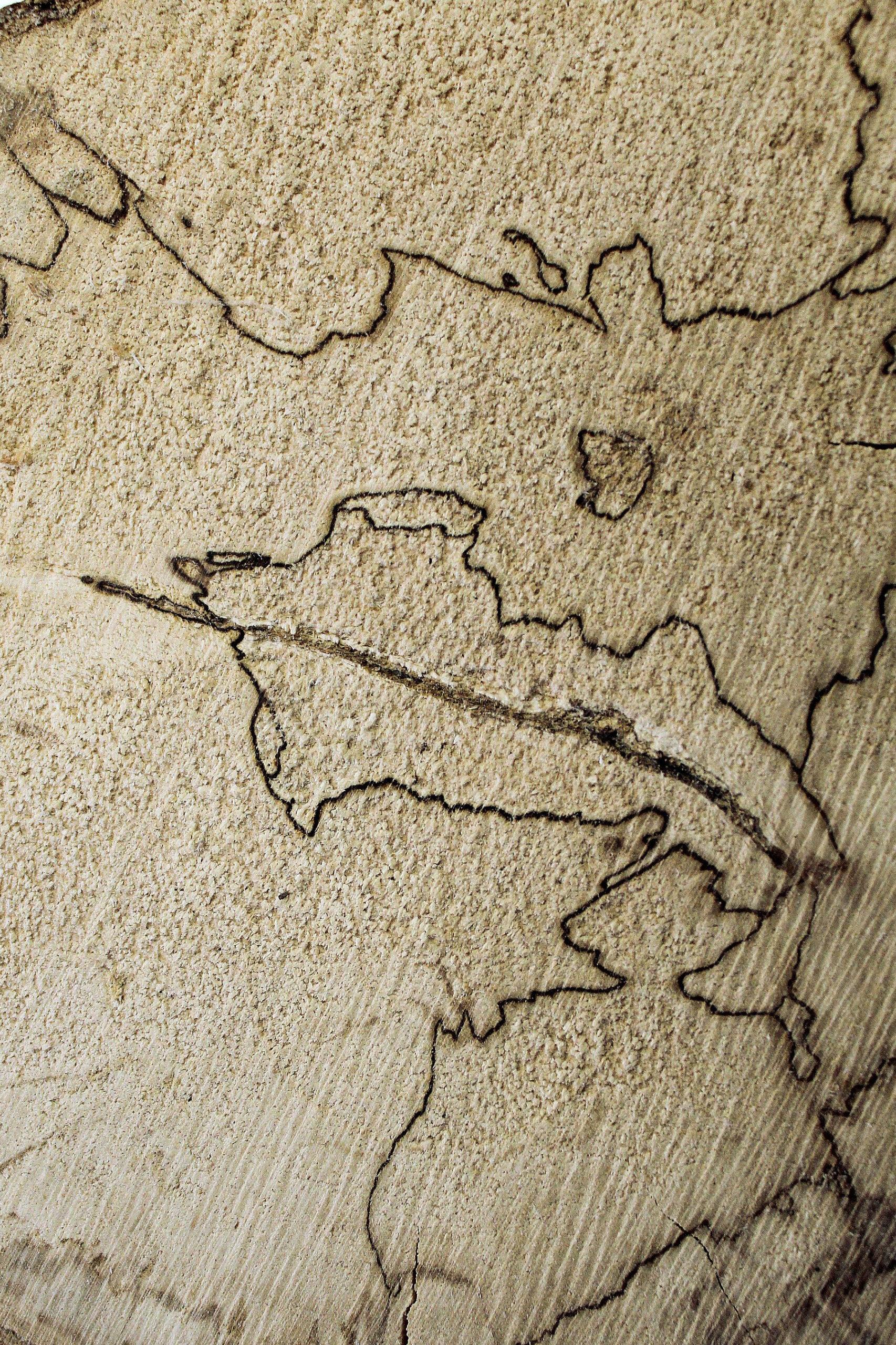 Spalted wood - legno fiorito